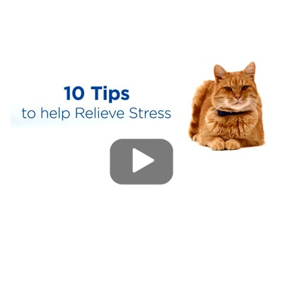 Stress reduction videos online and in clinic